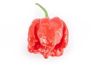 Hong San Ho F1 - Capsicum annuum - variedad de chile