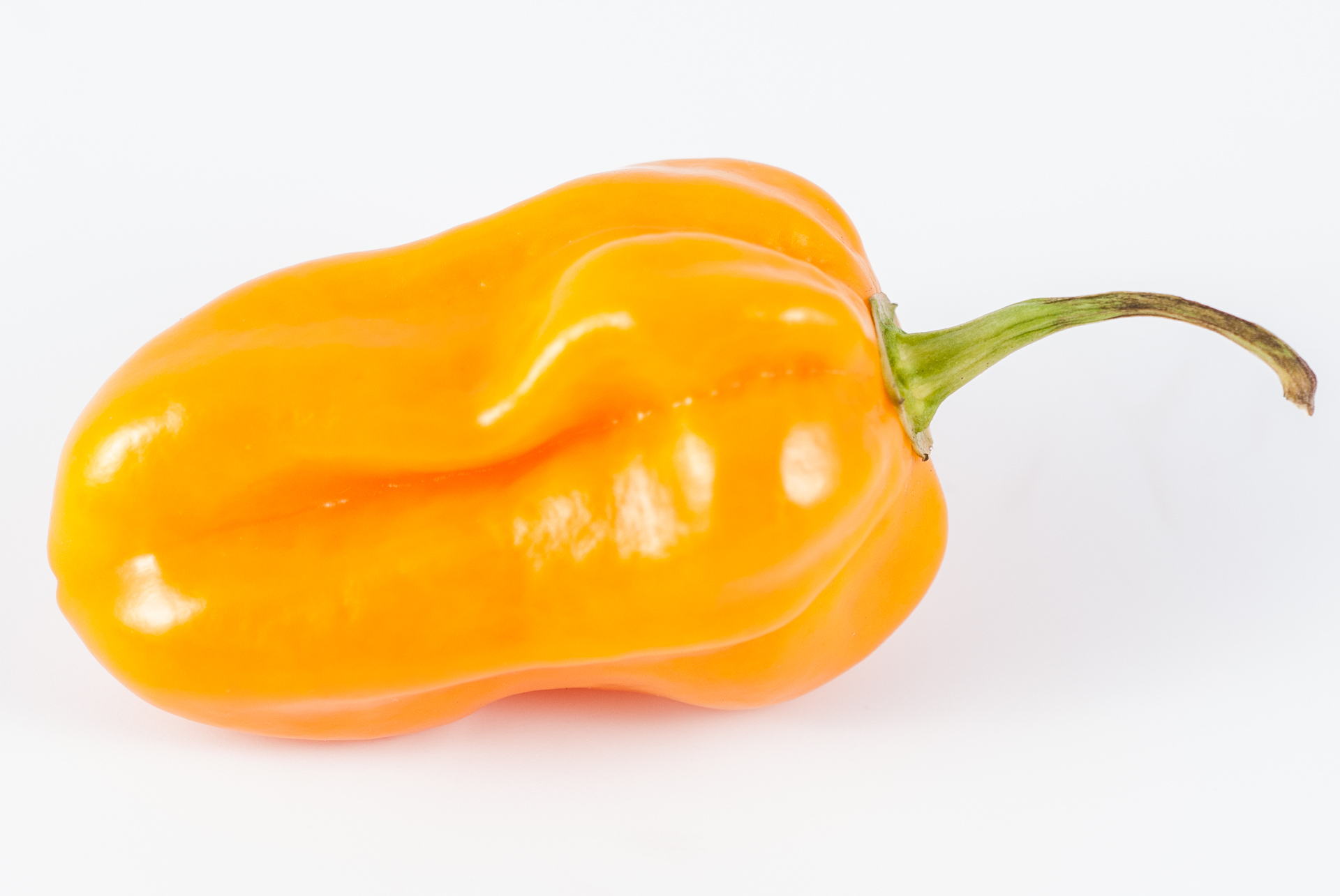 Lorai - Capsicum annuum - Chilisorte