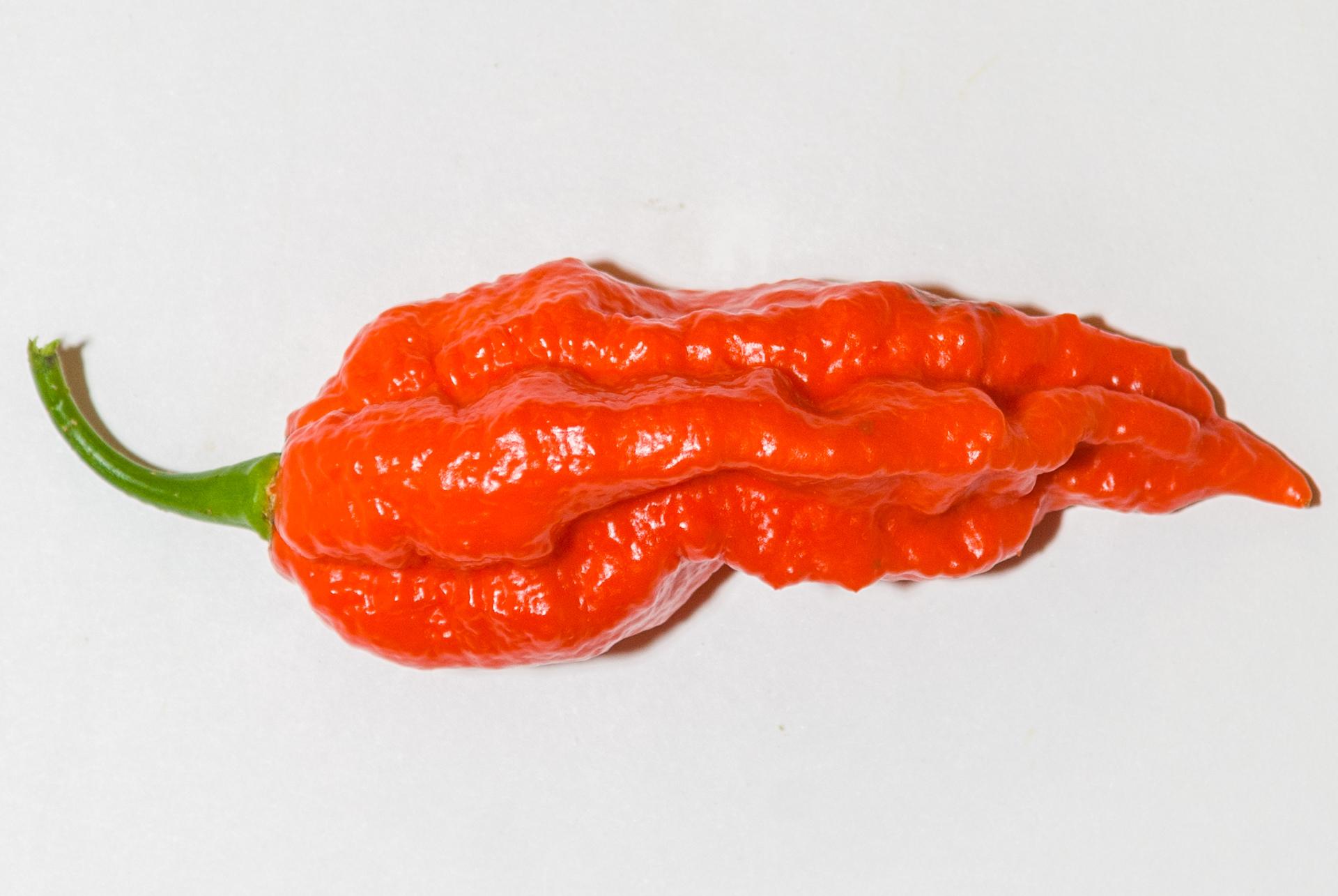 BRA 00035882-0 - Capsicum sp. - Chilisorte