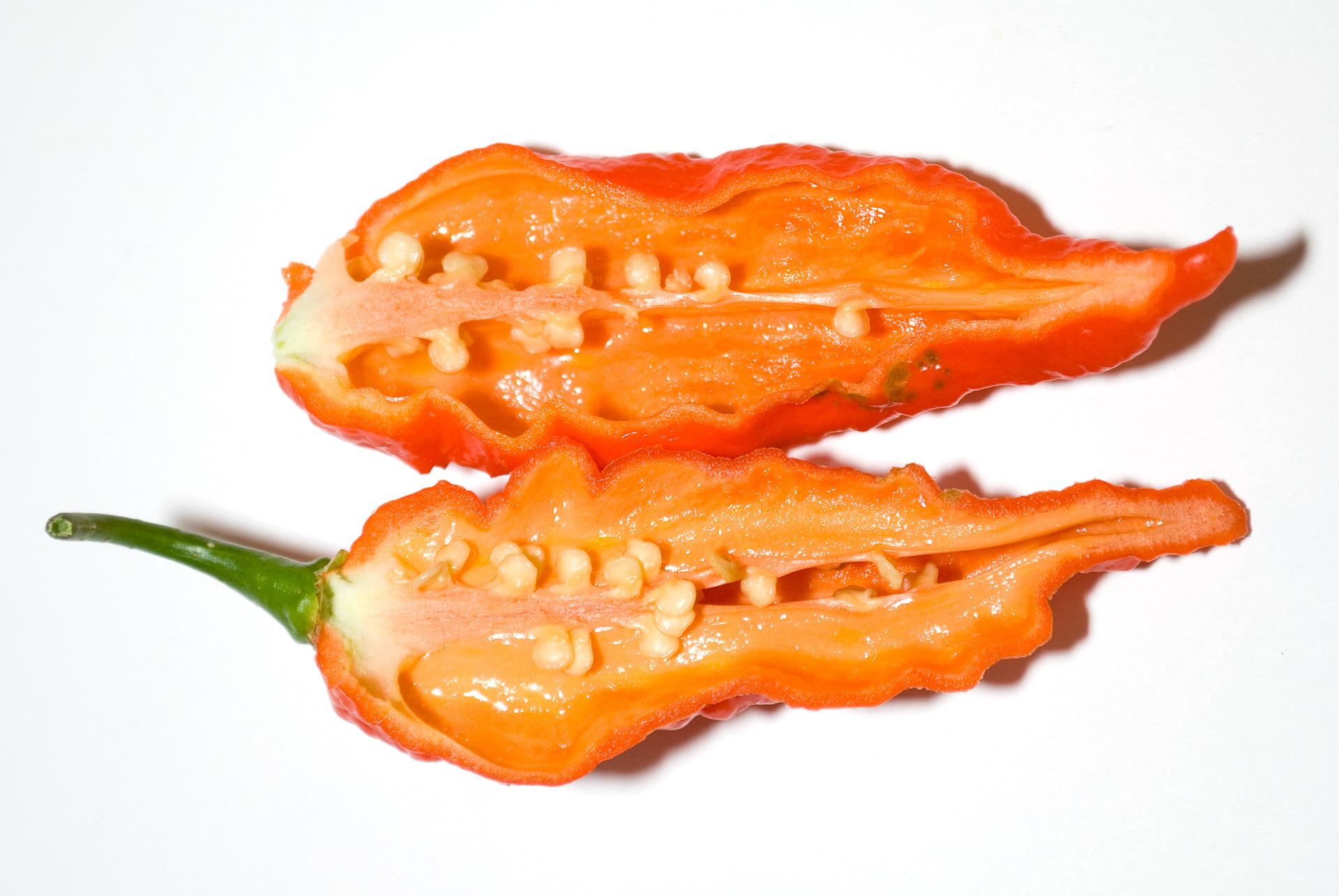 PI 205178 - Capsicum annuum - Chilisorte