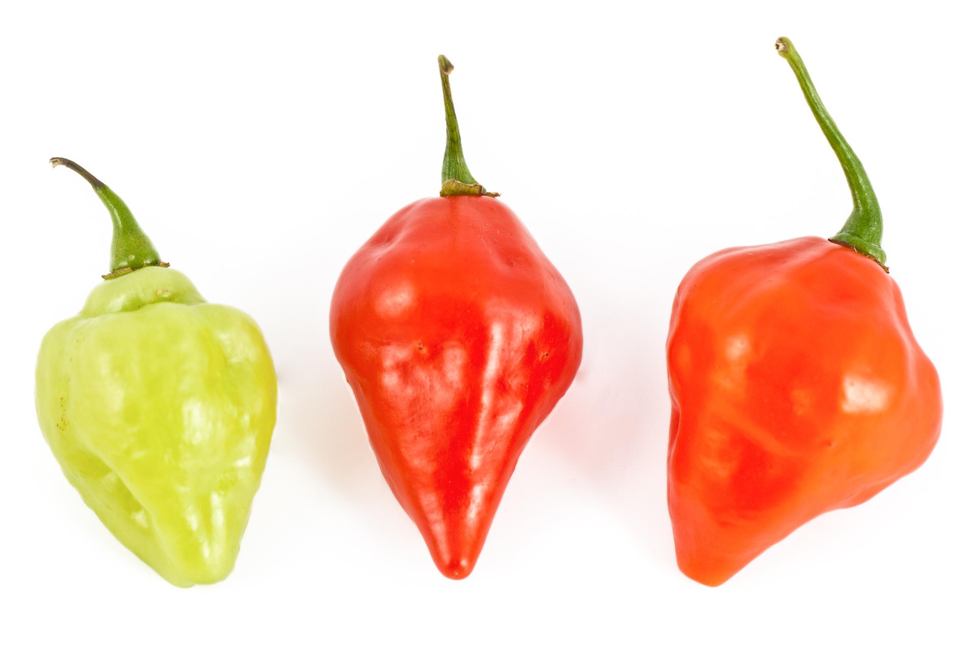 Cherry pepper - Capsicum annuum - variedad de chile