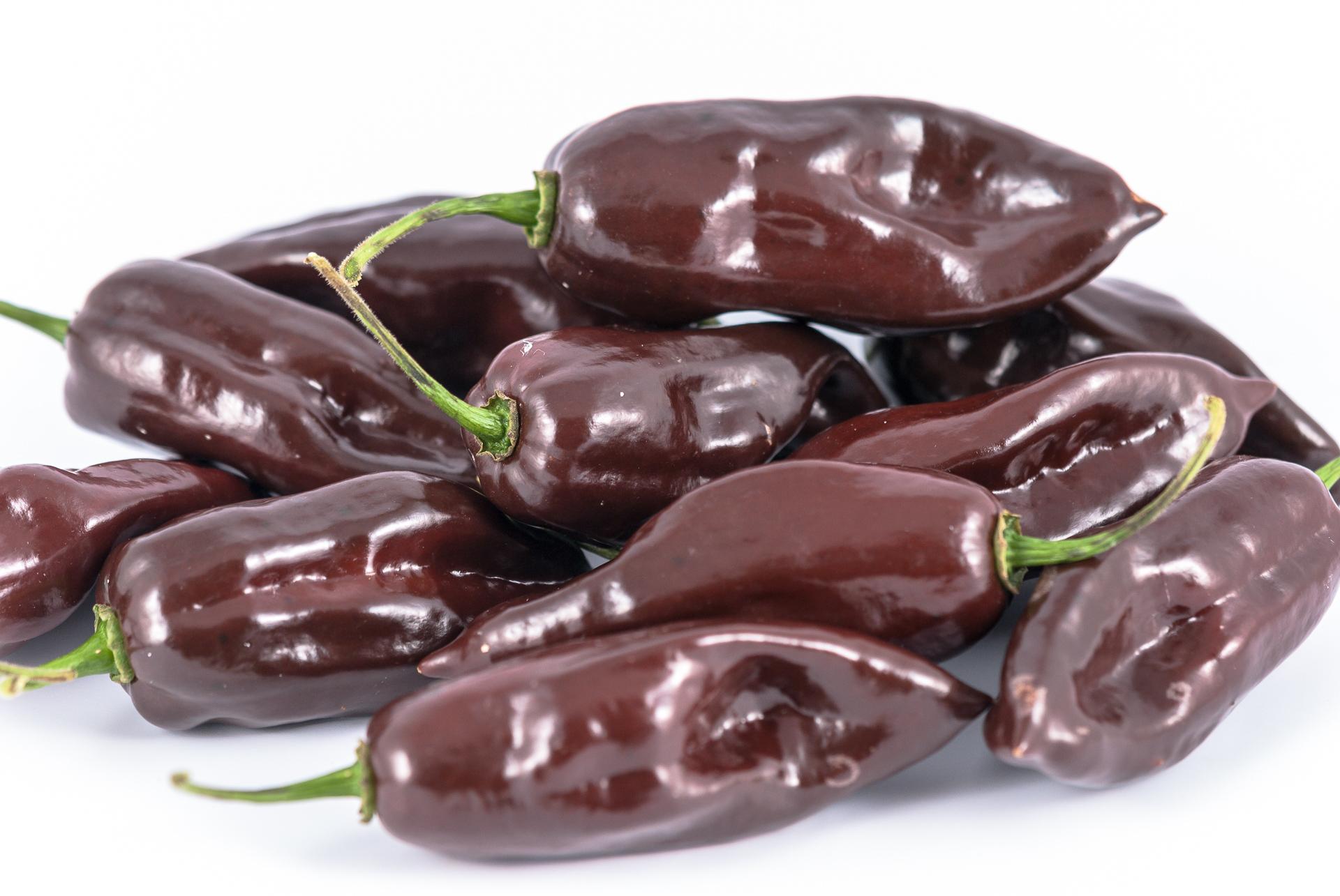 Puta Pario - Capsicum chacoense - Chilisorte