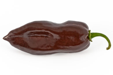 Offspring - Capsicum annuum - variedad de chile