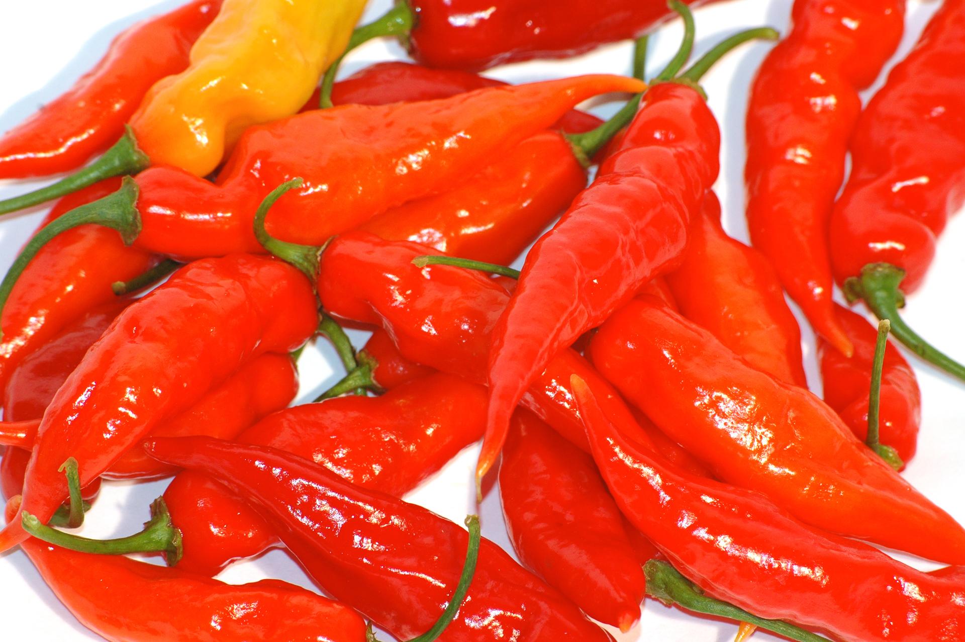 Sok Hu - Capsicum annuum - Chilisorte