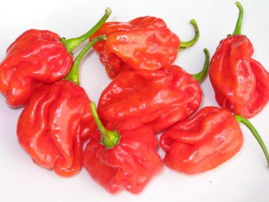 Cherry - Capsicum sp.