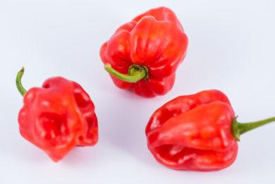 CAP 1485 - Capsicum pubescens