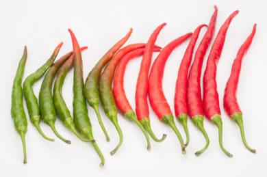 BRA 00170197-8 - Capsicum annuum - variedad de chile