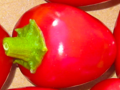 Chocolate Congo - Capsicum chinense
