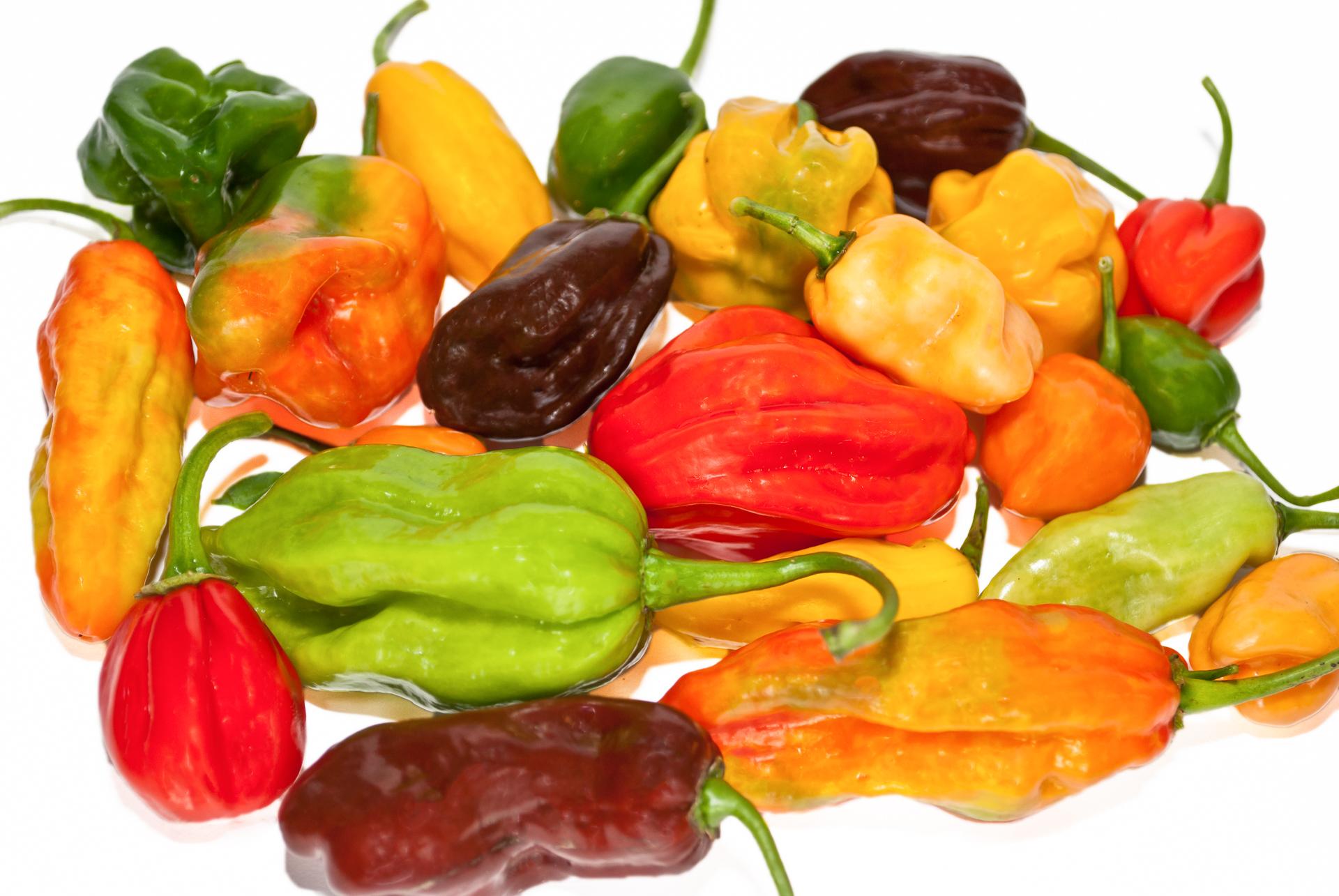 CGN16975 - Capsicum annuum - variedad de chile