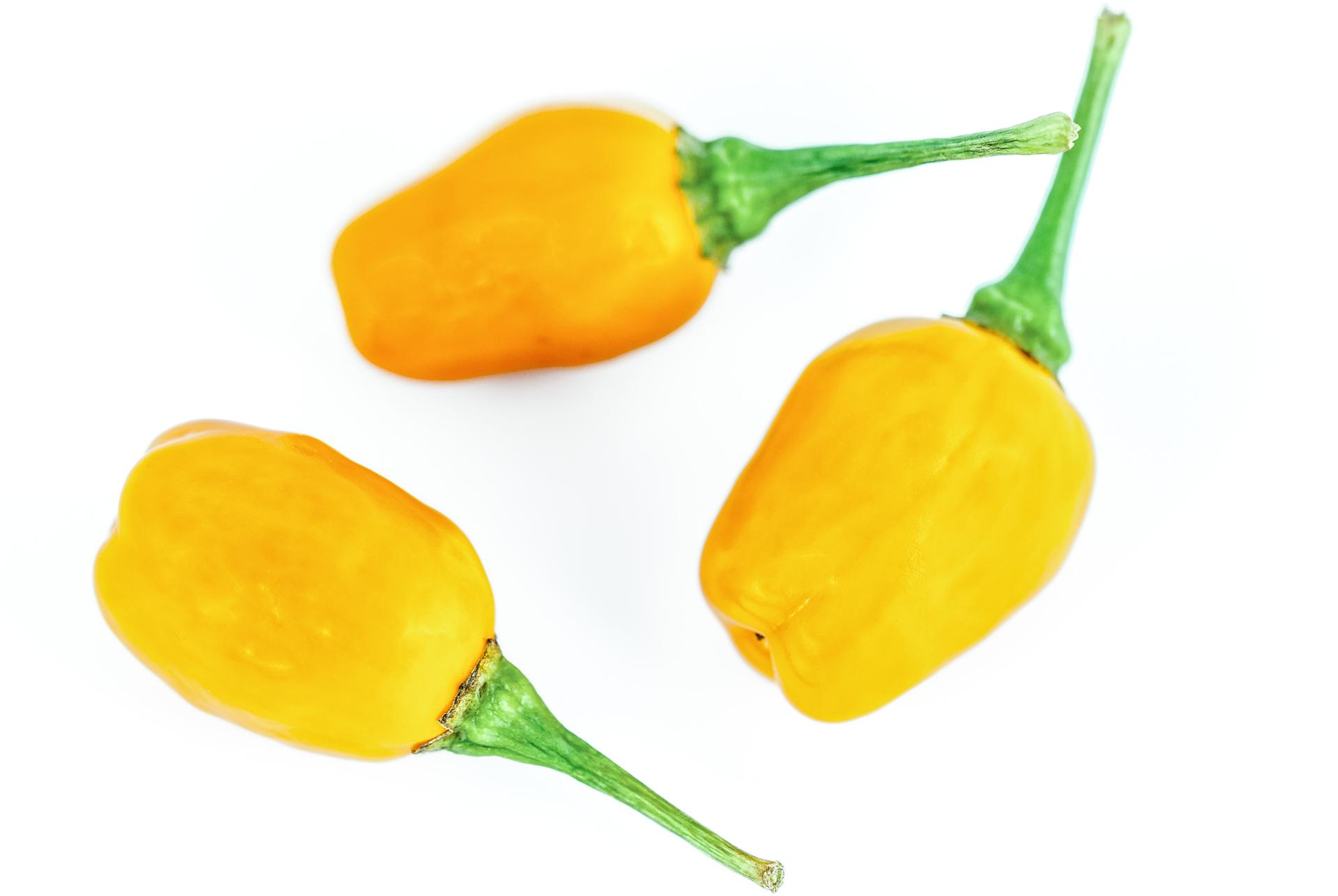 Dulce Larga - Capsicum annuum - variedad de chile
