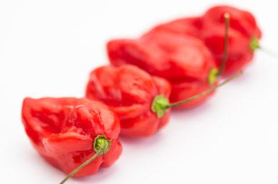 Stor Spansk Paprika - Capsicum annuum