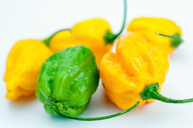 Chile - Capsicum frutescens