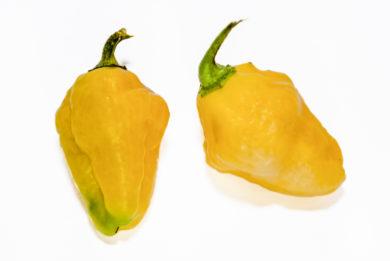 Aji Brown - Capsicum chinense