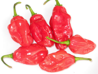 Cayenne Large Red Thick - Capsicum annuum