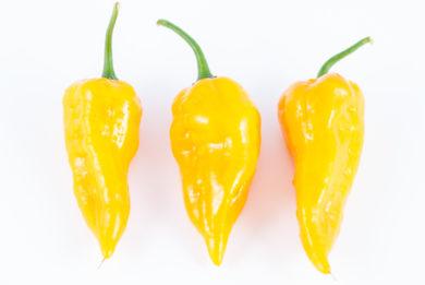 Green Squash - Capsicum annuum - variedad de chile