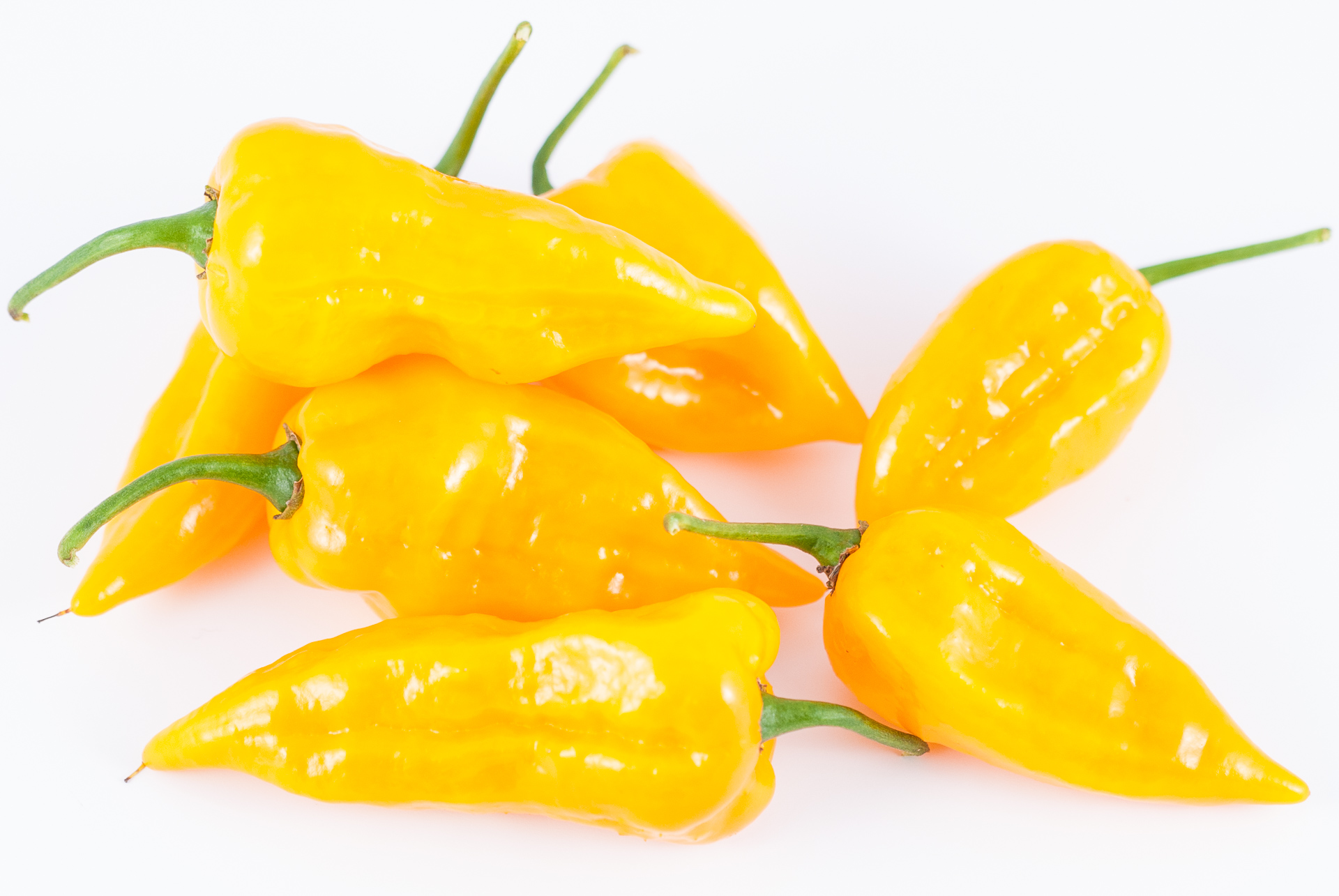 Pimento - Capsicum sp. - Chilisorte