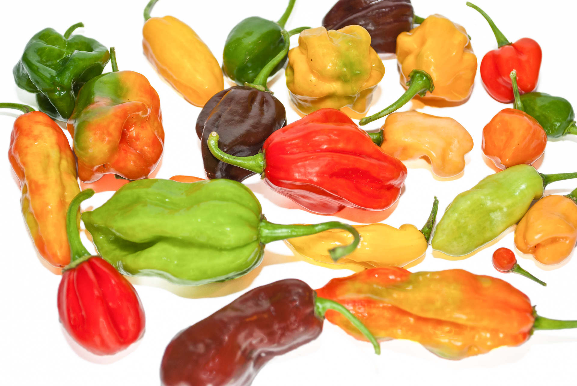 CGN21570 - Capsicum frutescens - Chilisorte