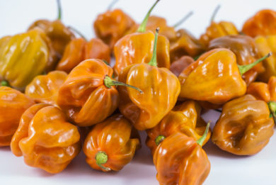 Guindilla Ocho - Capsicum annuum - variedad de chile