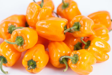 So-P-573 95 - Capsicum annuum