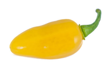 Chili Gordo - Capsicum annuum