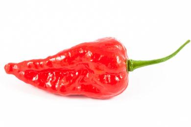 Anaheim M - Capsicum annuum - variedad de chile