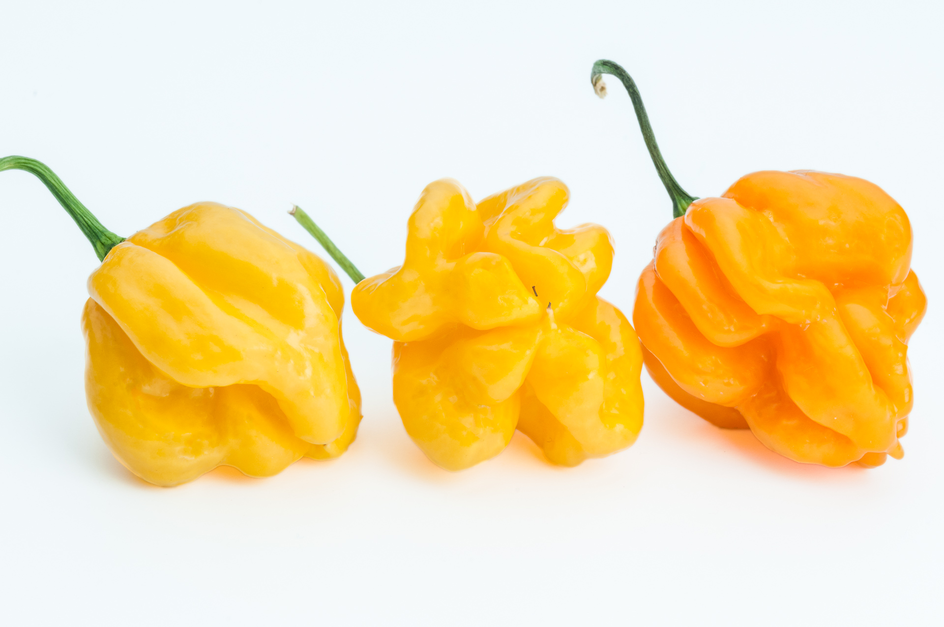 CGN24362 - Capsicum frutescens - Chilisorte