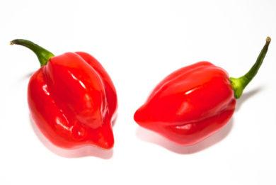 BPGV16134 - Capsicum annuum - variedad de chile