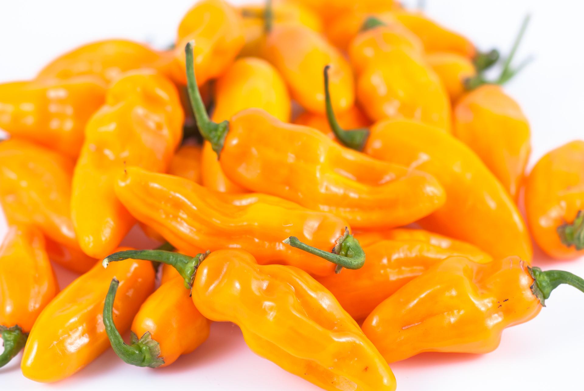 Guindilla Redonda - Capsicum annuum - variedad de chile