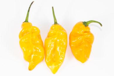 Chilli Padi - Capsicum frutescens