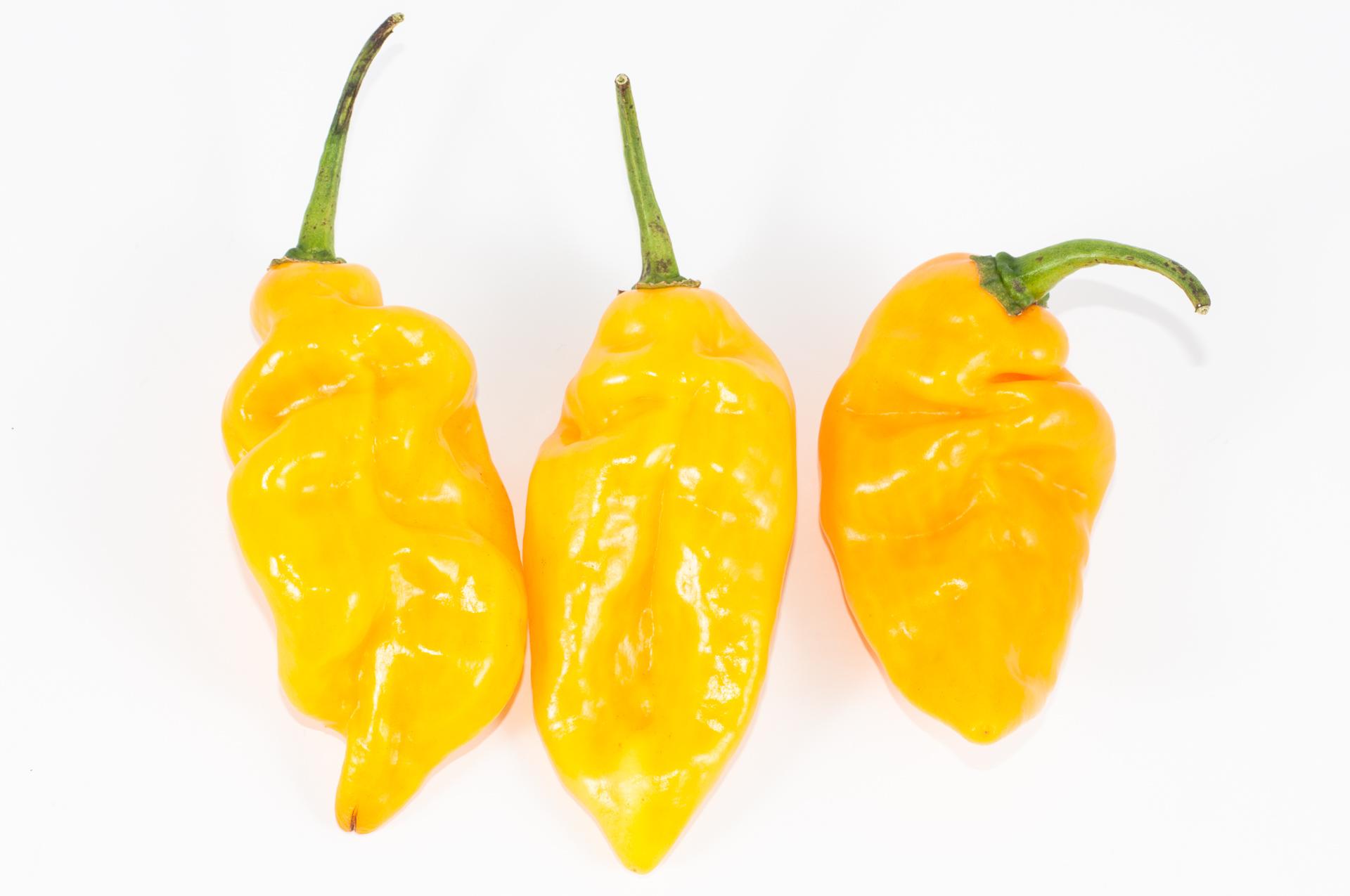 Samotsvet - Capsicum annuum - Chilisorte