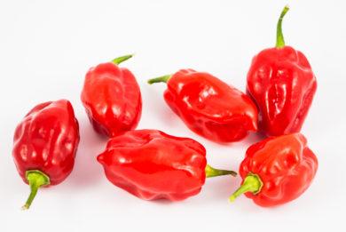 Pimenta Murupi - Capsicum chinense