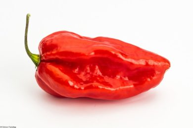 Devils Tongue Red
